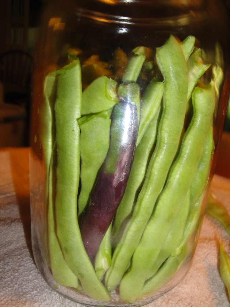 Probiotic Lacto-fermented Fresh Green Beans (1/6)
