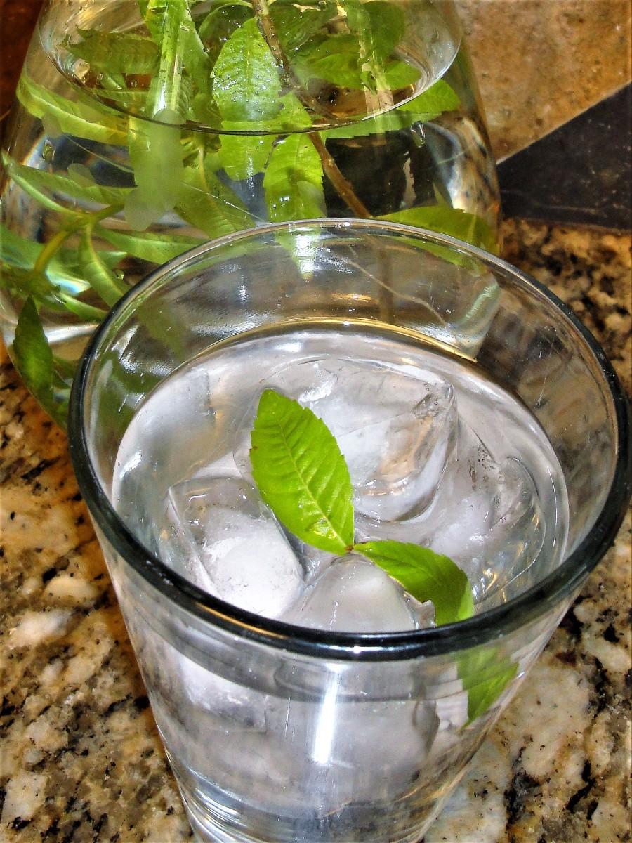 Lemon Verbena fresh leaf tea